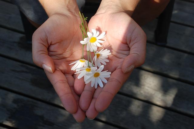 deux mains en forme de coeur tendant des fleurs
